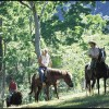 Horse riding, Mullumbimby