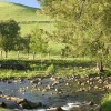 Gloucester Tops, Barrington Tops NP