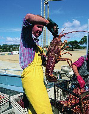 Crayfisherman
