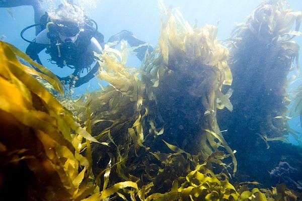 Dive Victoria - Queenscliff